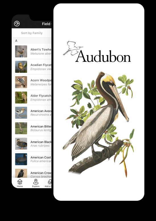 The National Audubon Society
