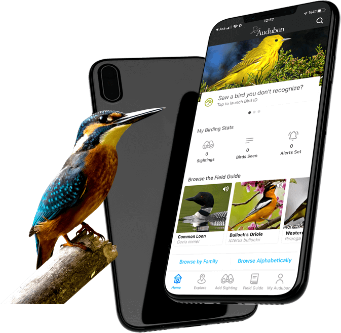 The National Audubon Society